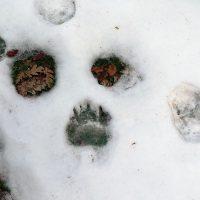 Fauna salvaje Zamora