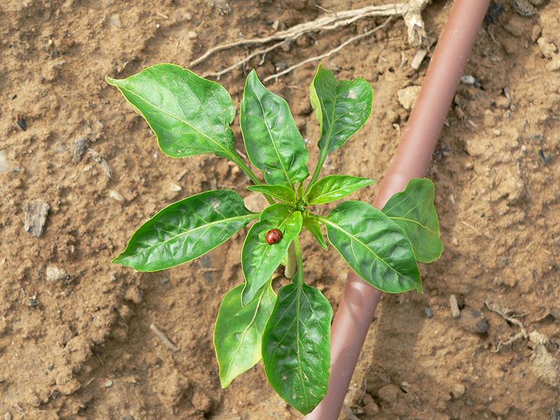 Agricultura ecológica Zamora