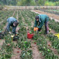 Huerta Agricultura ecológica Zamora