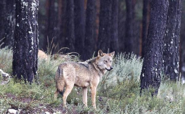 Centro del Lobo Sanabria