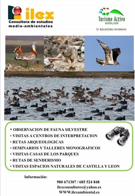 Poster Turismo Activo ILEX