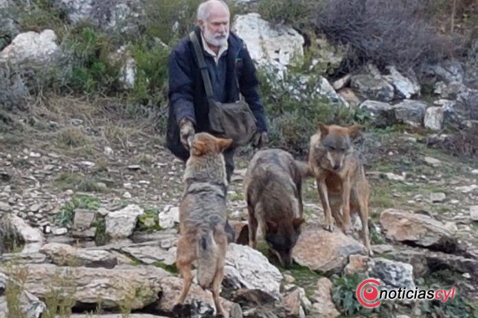 centro-lobo-iberico-sanabria-zamora