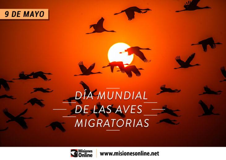 9-de-mayo-día-mundial-de-las-aves-migratorias-730x517