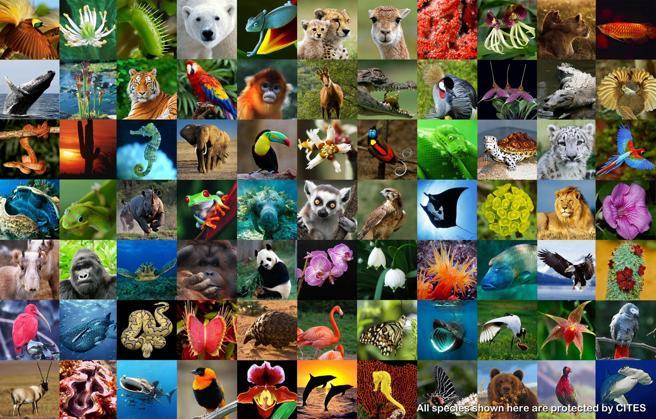dia-internacional-biodibersidad