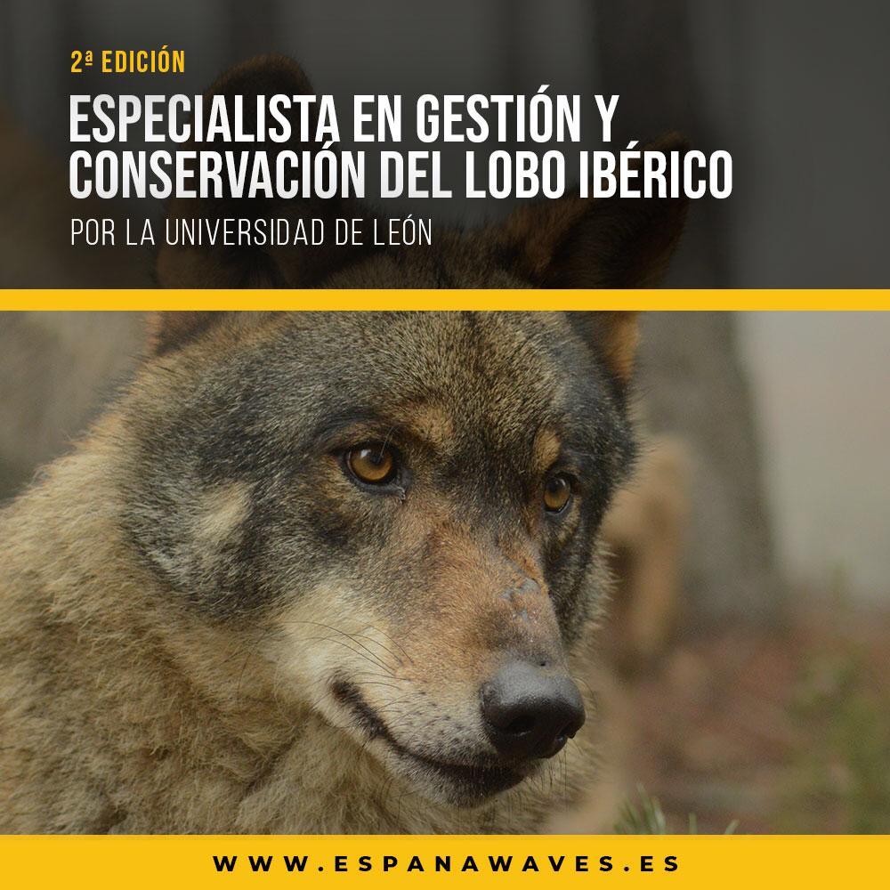 especialista gesticon conservacion lobo iberico