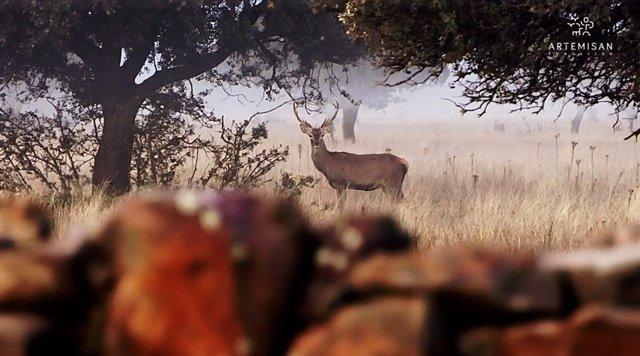 artemisan-prohibir-caza-parque-nacional