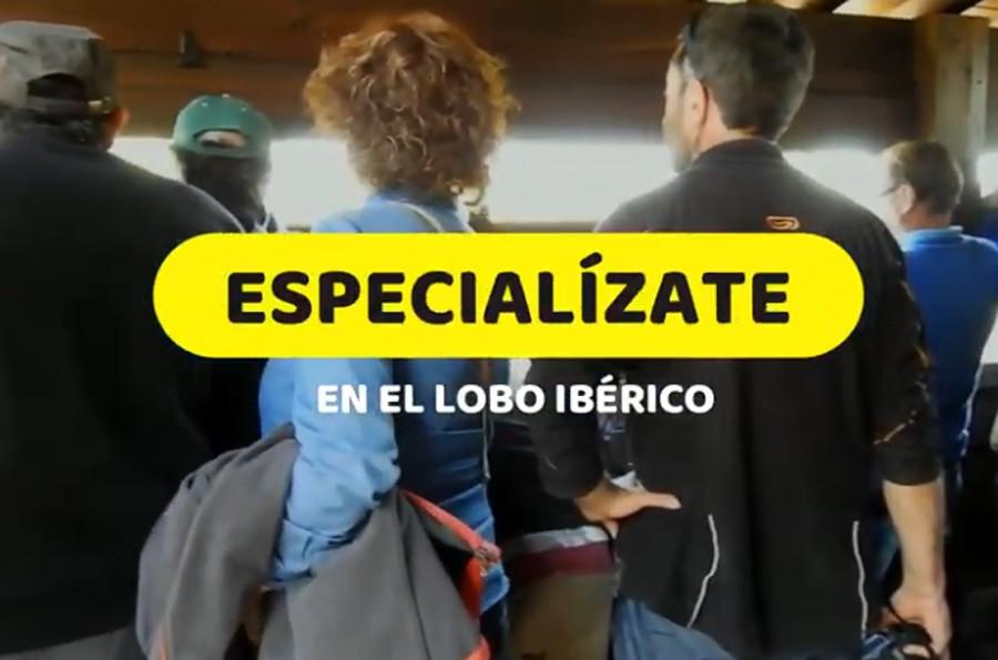 curso-lobo-iberico